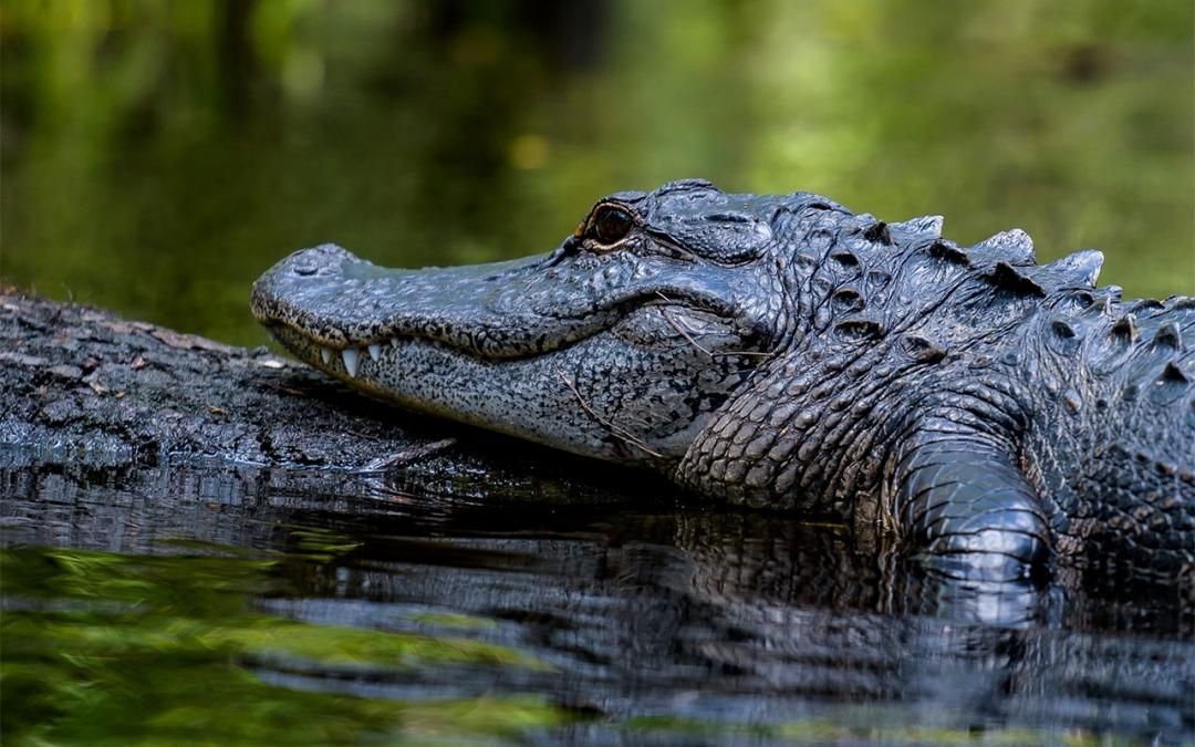 Kayaking Wildlife