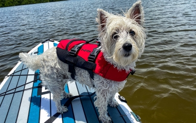 Pets onboard need Life Jackets too!